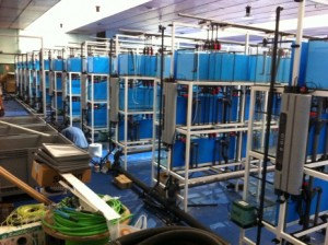 acuicultura-5