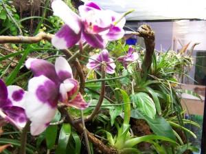 Jardines-verticales-3